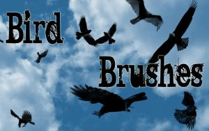 Photoshop Brushes: Birds by AngelicWays