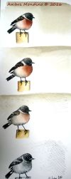 African stonechat by flysch