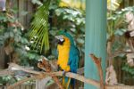 Macaw by Focus-Fire