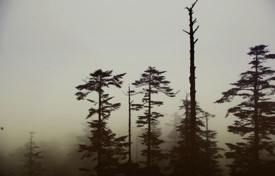 Shadowy Trees by turquoise-truck