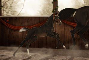AQS Winter Event | Foal halter by Zoubstance