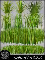 Grass 002 by poserfan-stock