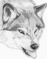.Wolf - Submission. by White-Wolfen