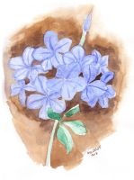 Blue Plumbago by melcasipit