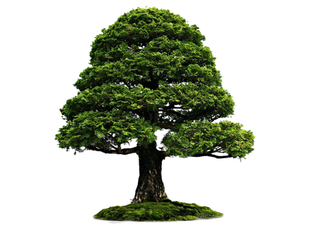 Png Tree 4r by Moonglowlilly