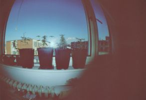 Lomography cannabis by Dan-vole