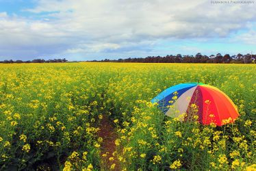 Another year Another Canola Field by FlabnBone