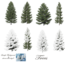 Pine Trees png stock by mysticmorning