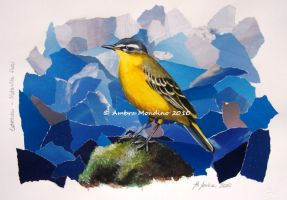 Yellow wagtail by flysch
