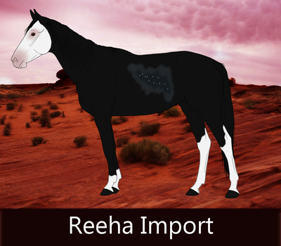 024 Reeha Import by ReehaOutlaw