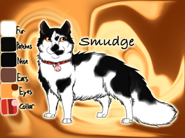 Smudge the Kittypet - Firestar's Quest by Jayie-The-Hufflepuff