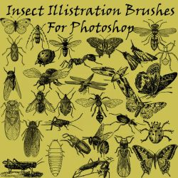 Insect Illistration Brushes PS by BohemianResources