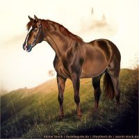 HEE Horse Avatar - FHF Figaro by Art-Equine