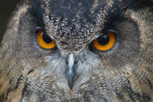 Holiday 2012 - Fire Eyes by cfowler7