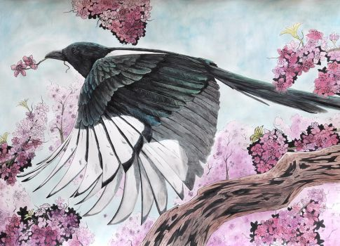 The Magpie and the cherry blossoms by BecciES