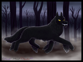 .:Dark Wolf:. by DarkWindCimba