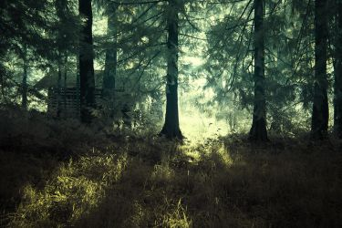 Forest Secrets by Notoriouscadi