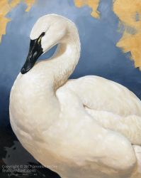 Tundra Swan Portrait by Nambroth