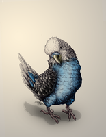 Ink Drawing - Budgie in Blue by Moth-Doll