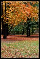 Early Autumn by adamsik
