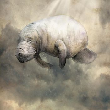 Sky Manatee by theseavoices