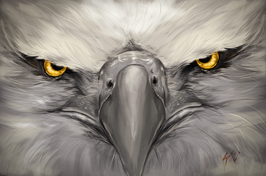 The Anger of the Eagle by saystark