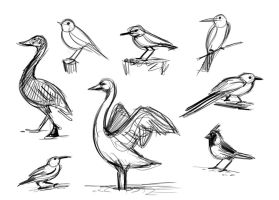 Gesture Drawing Birds by brianpitt