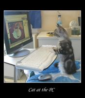 Cat at the PC by Flore-stock