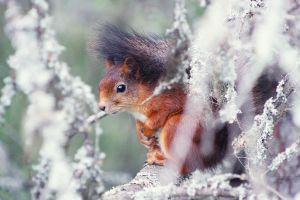 Squirrel by bippla