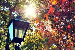 Lovely autumn day by WindyLife