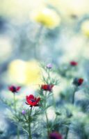 Red Flowers by photo4arteu