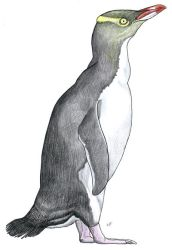 Yellow-eyed Penguin by PaleoAeolos