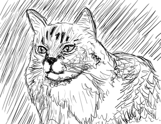 Cat Drawing by Joizjoiz