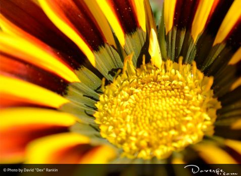 Flower by Doverge