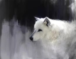 White Wolf by bluesungfruit