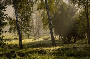 Pasture by Joffi