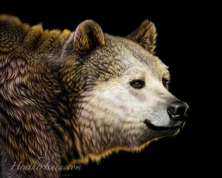 Orso by Heatherzart