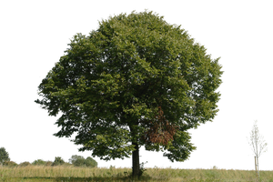 tree 9 png by gd08