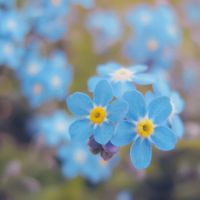Forget Me Not IV by DorotejaC