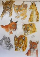 Cats by TheKarelia