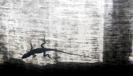 anole lizard with crazy toes by UnbridledMuse