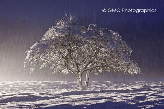 Painted with Snow by GMCPhotographics
