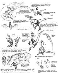 Raptor Tutorial by Droemar