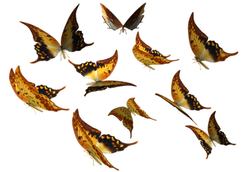 Large Swallowtail Butterflies by madetobeunique