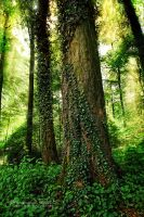 Ivy embrace 1 ~ Forest by AStoKo