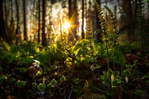 Sunset with small plants by sulevlange