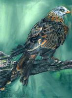 Red Kite Eagle by rlcreatif