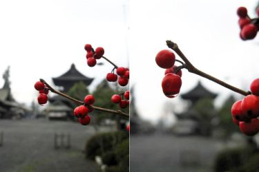 Red Little Fruits and a Japanese Temple by Lissou-photography