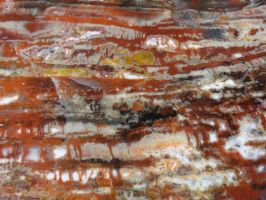 Tronc fossile III by Fairling