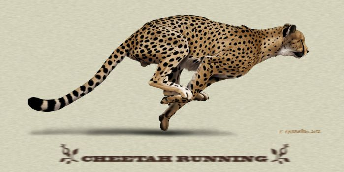 Cheetah running by Deviantferrick